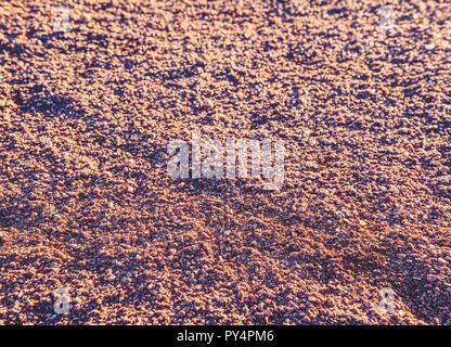 Empreintes et marques de service sur tennis détails. Rouge brique pilée sec léger sur la surface du terrain de tennis en plein air. Texture rugueuse contre sun Banque D'Images