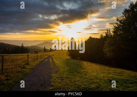 L'Allemagne, le long de sentiers de randonnée dans le paysage naturel de la forêt-noire dawning light tôt le matin