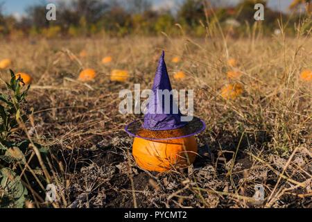 Pumpkin portant un chapeau de sorcière à l'extérieur dans un champ à l'Halloween Banque D'Images