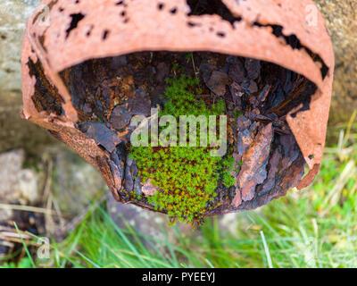 Nouvelle vie / résilience - moss dans la pipe du métal rouillé