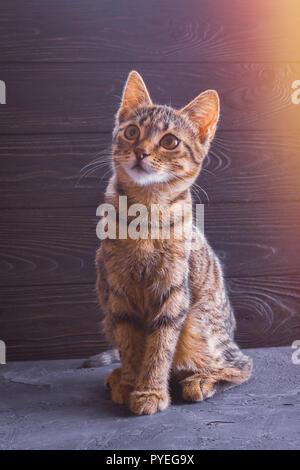 Belle couleur brun mignon chaton sur un fond de bois Banque D'Images