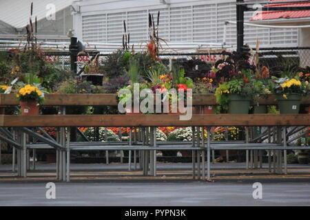 Rangées de plantes sur des bancs et des échafaudages pour vente à la pépinière locale. Banque D'Images