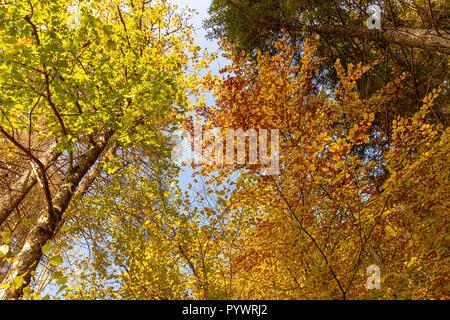 Impression de randonnée dans la Forêt Noire le long de l'Roetenbach en automne, en Allemagne. L'automne magique Forrest. Les feuilles d'automne coloré. Fond romantique. Banque D'Images