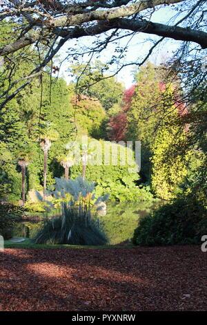 Arbres en automne avec les feuilles tombées à Sheffiield park, National Trust garden Banque D'Images