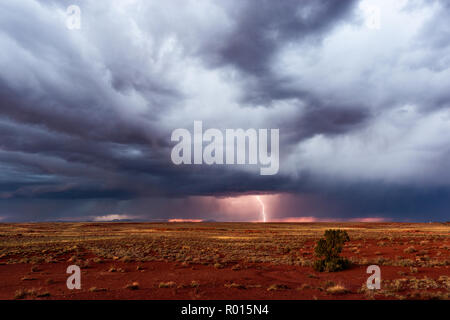Ciel d'orage avec des éclairs et un arbre solitaire sur l'horizon. Banque D'Images