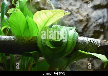 Serpent de couchage Banque D'Images