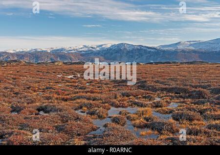 Les zones humides de la toundra dans le haut Arctique près de Equip Sermia au Groenland Banque D'Images