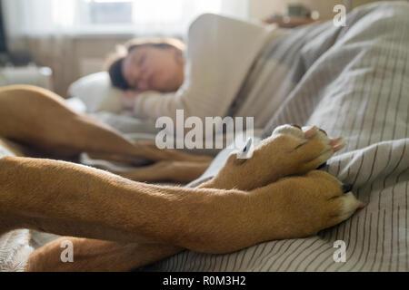 Dormir dans le lit avec un chien de compagnie. Banque D'Images