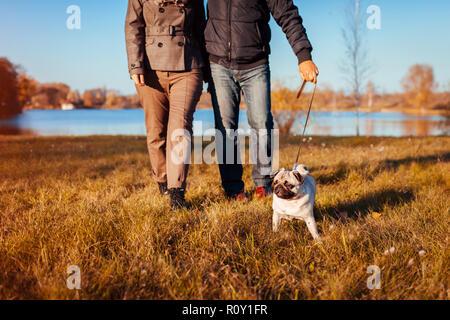 Pug dog Senior couple walking in autumn park par rivière. Heureux l'homme et la femme bénéficiant de temps avec pet.