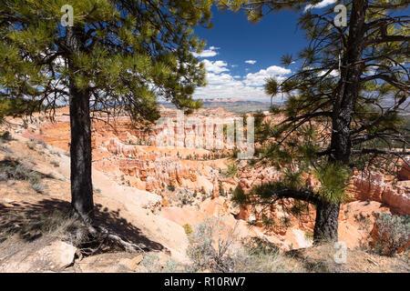 Avis de formations de Hoodoo le long du bord près de Sunrise Point dans le Parc National de Bryce Canyon, Utah, USA. Banque D'Images