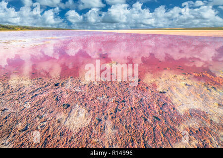 Sel rose de la rive pittoresque Lac, Gregory dans l'ouest de l'Australie. Ciel bleu avec des nuages reflètent dans Hutt Lagoon entre Geraldton Kalbarri et, avec une couleur rose vif pour la présence d'algues en été Banque D'Images