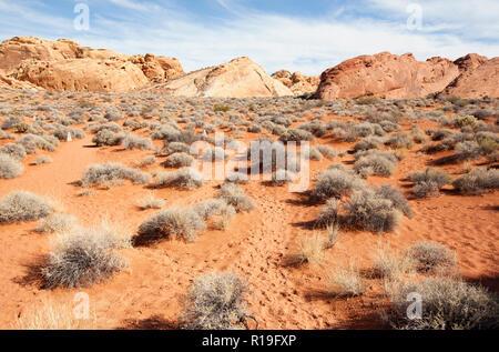 Rainbow Vista sentier dans la vallée de feu dans le Nevada State Park