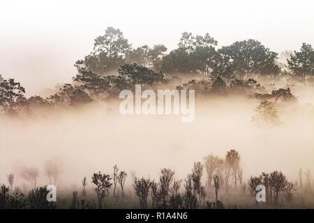 Silhouette de forêt tropicale couverte de brouillard matinal. Misty Mountain. thaïlandais sur les jungles de la vapeur d'eau blanc contour uniquement d'arbres couverts peut être vu. Banque D'Images