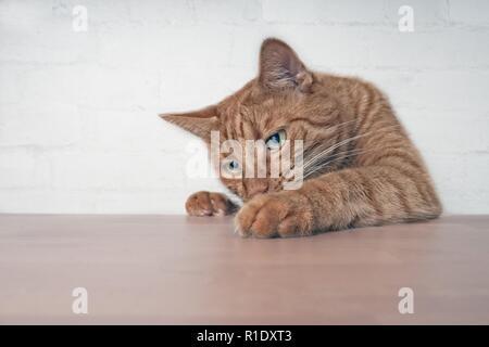 Naughty ginger cat montrant pattes sur table en bois.