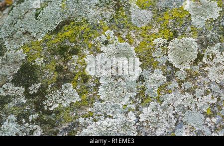 Libre de lichens et mousses sur un bloc de granite Banque D'Images