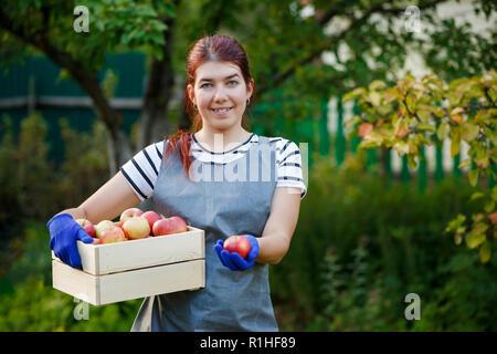 Image de happy girl jardinier avec la récolte des pommes en caisse de bois de jardin Banque D'Images