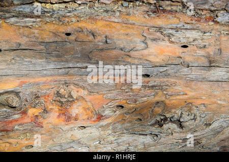 Close up de bois texturé du vieux cèdre avec de l'écorce a été dépouillé Banque D'Images