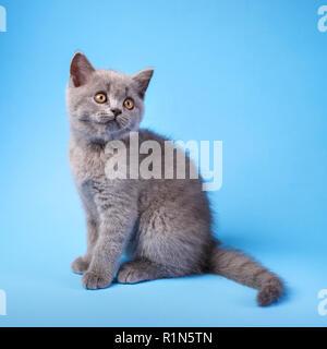 Kitty gris avec des moustaches sur un fond bleu.