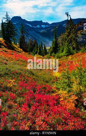 Septembre 2018 aboind: couleurs d'automne le long du sentier de l'Oie Sauvage, le mont Baker Wilderness, Snoqualmie National Forest, North Carolina, USA.