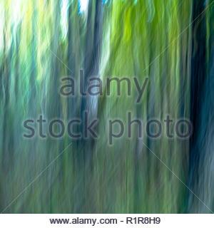 Mouvement de caméra intentionnelle forestiers (ICM) de droit à la lumière à vert moyen et les tons de bleu foncé avec des troncs Banque D'Images