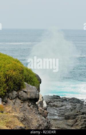 Souffleur et les falaises le long de la côte du Pacifique, le parc national des Îles Galapagos, l'île Espanola (Hood), Punta Suarez, l'Équateur Banque D'Images