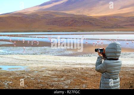 Woman Prendre des photos d'un grand groupe de flamant rose à Laguna Hedionda, le lac salin dans Altiplano andin, Potosi, Bolivie Banque D'Images