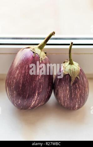 Grande mauve avec bandes blanches de l'aubergine close-up Banque D'Images