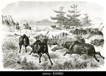 Vieille illustration de chasseurs chassant les girafes et les rhinocéros et les buffles les chasser. Par Janet-Lange après Baldwin, publ. sur le Tour du Monde, Paris, 18 Banque D'Images