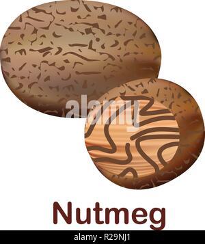 L'icône de la muscade. Illustration réaliste de l'icône vecteur muscade pour la conception web isolé sur fond blanc Banque D'Images