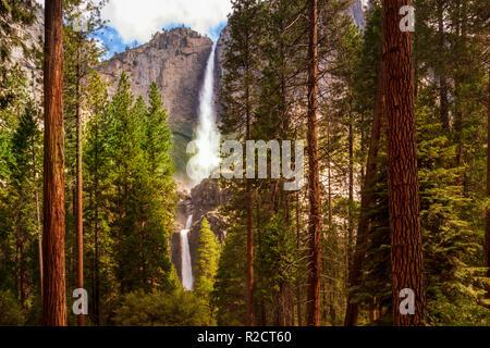 Yosemite Falls encadrée par des séquoias Banque D'Images
