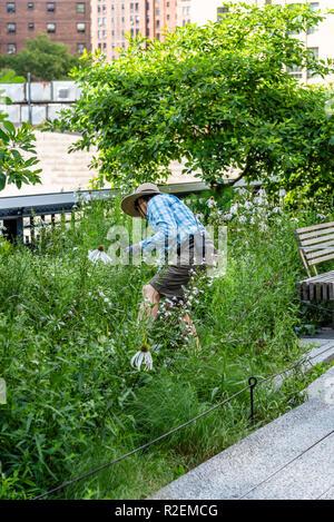 La ville de New York, USA - 22 juin 2018: Bénévoles en prenant soin d'un jardin en ligne haute. La ligne haute est un parc linéaire, Greenway et rail trail. Banque D'Images
