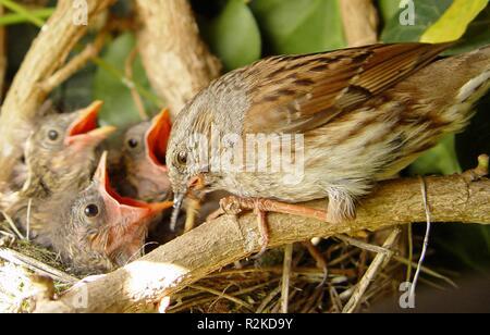 3 nid
