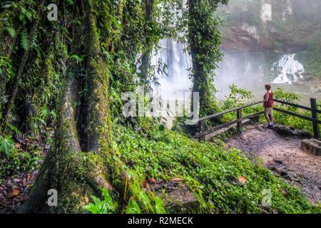 Les arbres tropicaux près de la Cascades Misol Ha dans la région de Chiapas, au Mexique. Banque D'Images