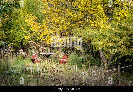 Jardin sauvage avec table et chaises rouges entourés d'arbres en automne Banque D'Images