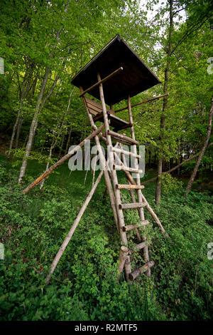 Siège élevé, les jeunes forêts, Allemagne, Berlin, Chiemgau