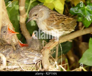 Nid sur son nid 2