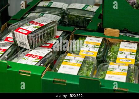Les contenants de salade mixte dans des boîtes d'expédition de plus en plus d'attente au sol dans un ancien abri de la seconde guerre mondiale. Banque D'Images