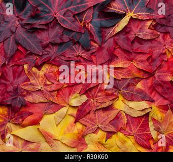 Beau fond collage de feuilles d'automne allant du jaune au rouge foncé