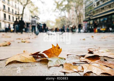 Libre de quelques feuilles sèches sur le trottoir de la rue Las Ramblas à Barcelone, Espagne, en un jour de pluie, avec quelques personnes méconnaissables dans l'arrière-plan