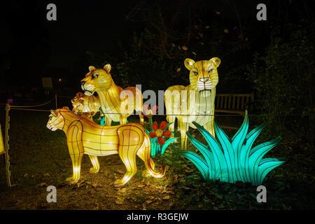 Los Angeles, 21 NOV: Belle lanterne colorée de Moonlight Forest Festival le Nov 21, 2018 à Los Angeles Banque D'Images
