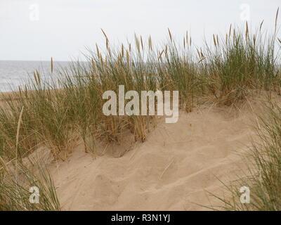 Dunes de sable en Scandinavie Banque D'Images