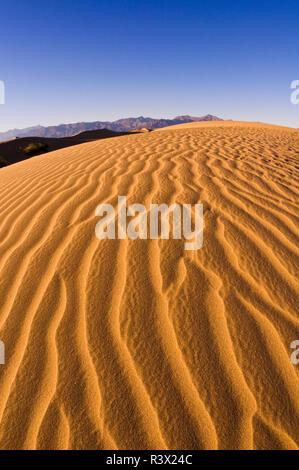 Lumière du soir sur dune, Mesquite Flat dunes de sable, la Death Valley National Park, California, USA Banque D'Images