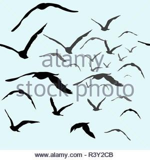 Les oiseaux dans le ciel Banque D'Images
