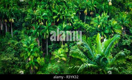 Chutes Umauma le long de la côte, la luxuriante Hamakua Big Island, Hawaii, USA