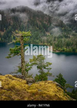 L'État de Washington, USA, North Cascades National Park, de vieux arbres surplombant le lac Diablo dans le brouillard Banque D'Images