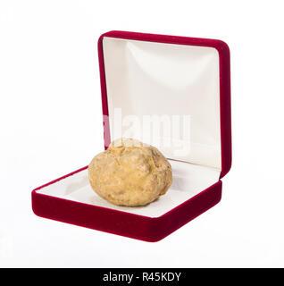 La vie d'une truffe encore dans une boîte de bijoux Banque D'Images