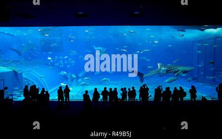 Aquarium d'okinawa Banque D'Images