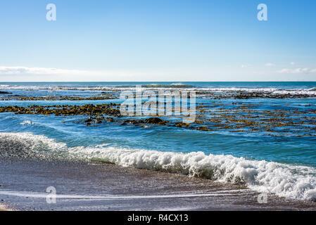 Paysage avec la mer, les vagues et les algues laminaires ciel clair sur l'horizon à plage de Bushy scenic reserve, Oamaru, populaire pour l'observation des phoques et des pingouins. Banque D'Images