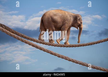 Acrobat Éléphant dans Sky marche sur corde Banque D'Images