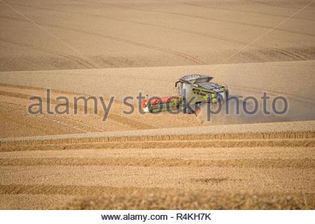 Vue de la récolte de blé d'été de coupe de moissonneuse-batteuse à la ferme de grandes cultures Banque D'Images